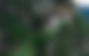 Envois colis au Bhoutan économique
