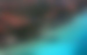 Envois colis Bonaire économique