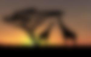 Envois Express au Botswana
