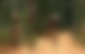 Envois colis économique au Burundi