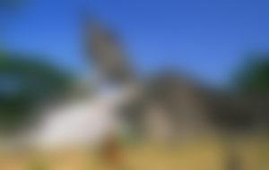 Envois Express au Laos
