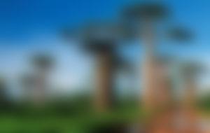 Envois Express à Madagascar