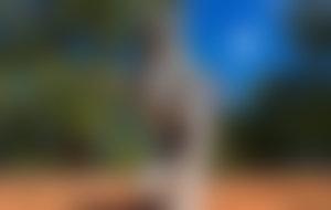 Envois colis économique à Madagascar