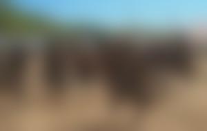 Envois colis économique au Malawi