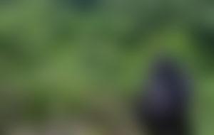 Envois colis économique au Rwanda