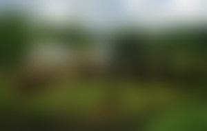 Envois colis Samoa économique