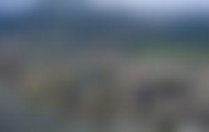 Envois colis Trinité-et-Tobago économique