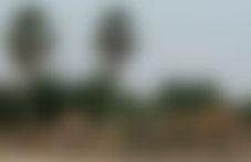 Envois Express Cameroun